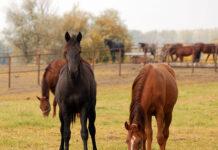 Starannie zorganizowany obóz konny - co warto wiedzieć?